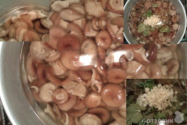 Рецепт Соленые волнушки (горячий способ засолки) фото