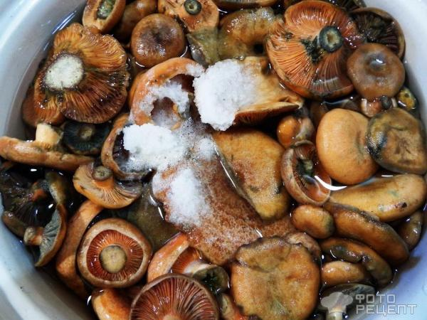 рецепты из грибов рыжики на зиму фото