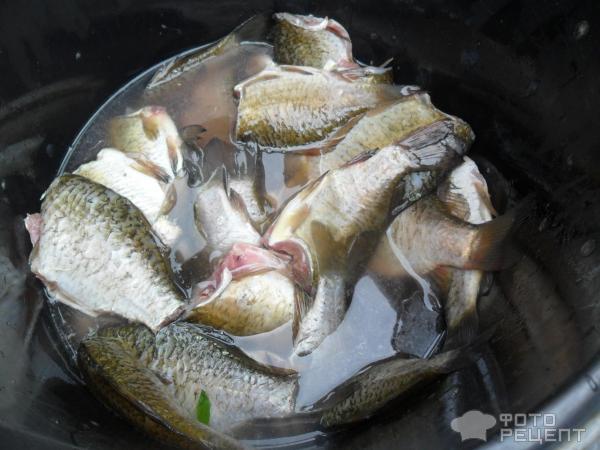 рецепты рыбные концервы автоклав