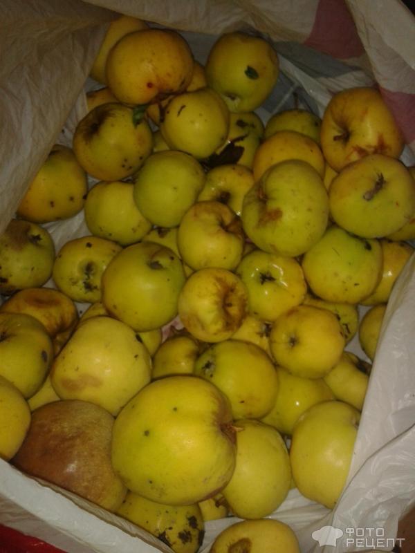 Болгарский перец маринованный с яблоками на зиму