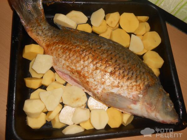 Сазан рецепты приготовления пошагово 159