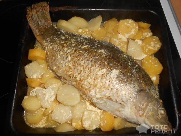 Как приготовить сазана в духовке с картошкой