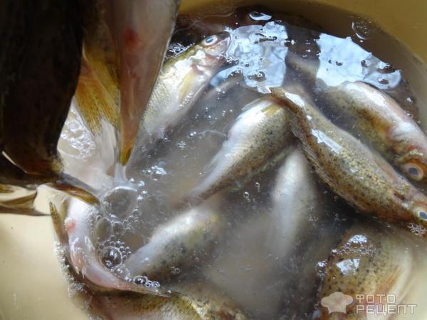 ловля и приготовление рыбы видео