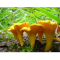 Фото Заготовка грибов на зиму