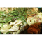 Фото Салат с брокколи, курицей и грибами