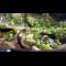 Фото Баклажаны тушеные с кабачками и грибами