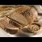 Фото Хлеб из отрубей в микроволновой печи