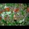 Фото Салат из зеленой чечевицы