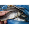 Фото Рыба речная вяленая