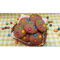 Фото Шоколадное печенье M&M'S