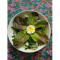 Фото Салат с китайской редькой и яйцом
