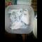 Фото Куриная грудка в пакете, приготовленная в микроволновой печи