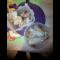 Фото Жареная курица на сковороде