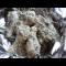 Фото Куриная голень в майонезном соусе запеченная в духовке