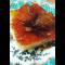 Фото Манный пирог с карамелью