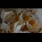 Фото Вареники с квашенной капустой и картофелем