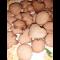 Фото Печенье из свежего имбиря